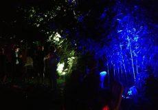 Eclairage architectural dans un parc 3